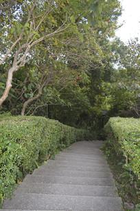 白云山阶梯绿道