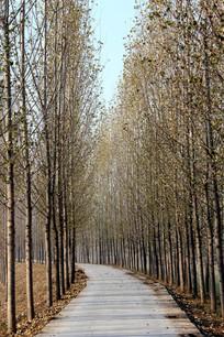 冬季林间小路