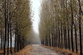冬季林间小路景色