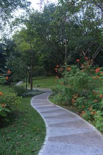 公园绿道凤凰花树木