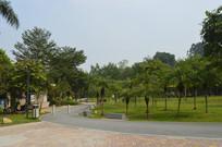 广州永泰公园绿道草坪树木