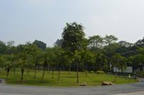 广州永泰公园绿道及草坪