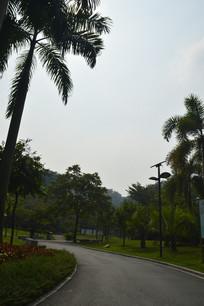 广州永泰公园绿道树木