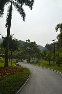 广州永泰公园绿化道路