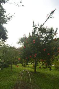 广州云溪生态公园扶桑园