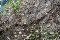 杭州小河直街藤蔓满布的墙
