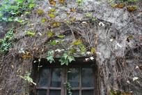 杭州小河直街藤蔓爬满的窗户