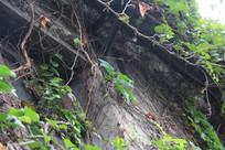 杭州小河直街藤蔓与屋檐