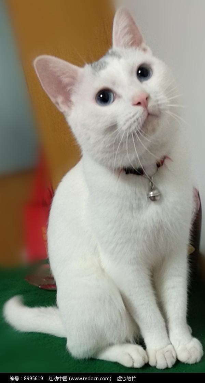 壁纸 动物 猫 猫咪 小猫 桌面 600_1119 竖版 竖屏 手机