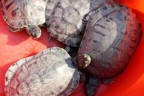 爬动的乌龟