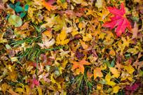 青草与秋叶