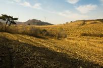 山脉玉米地秸秆堆