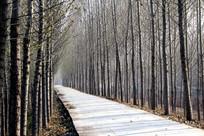 树林和小路