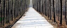 树林间通往远方的小路