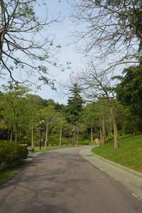 云溪公园绿道美人树