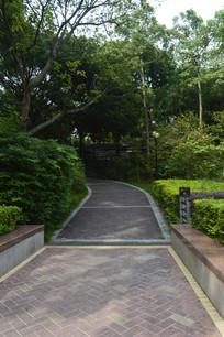 云溪生态公园道路绿树