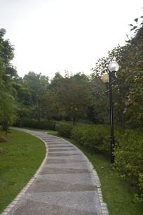 云溪生态公园道路树木