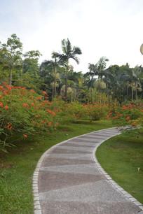 云溪生态公园绿道凤凰花树木