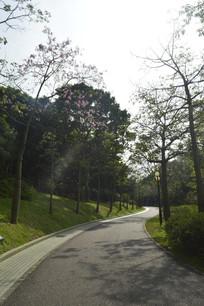 云溪生态公园绿道美人树