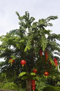 云溪生态公园树木红灯笼