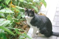 草从边的猫咪