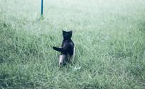 草丛里奔跑的小猫