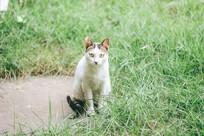 草丛里的猫