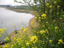春天里的红枫湖风光
