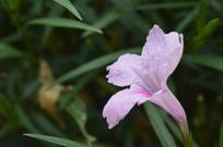 粉色花朵兰花草