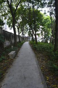 广州永泰公园道路绿树
