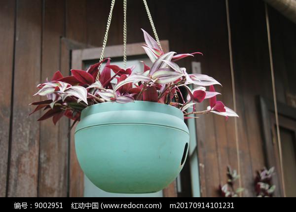 杭州小河直街吊着的花草图片
