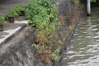 杭州运河与岸边