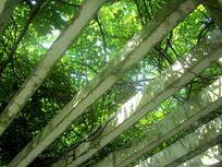 花藤架上的绿色植物