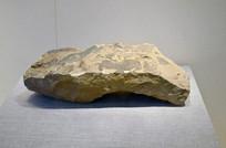 景谷宽叶木兰化石