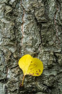 树上生长出的一片叶子