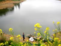 油菜花开的湖光风景