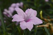 园林花卉兰花草