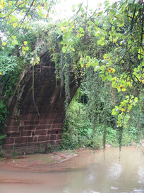 长满藤蔓的古镇石桥
