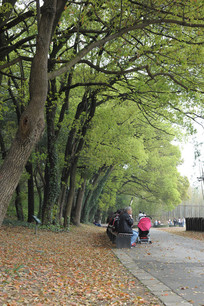 大树底下的游客