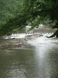 大树下淌过的小河