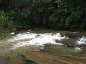 灌木丛下的小河