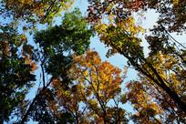 黑山扈绚丽多彩的深秋