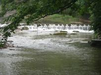 小河从大树下流过