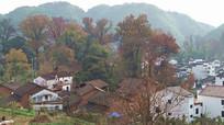 枫香树下的村落