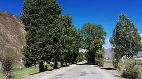 公路旁的树