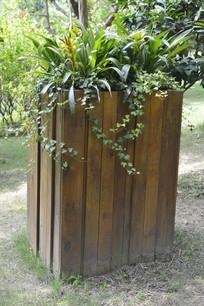 广州云台花园盆栽植物