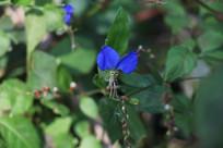 杭州湘湖树叶与紫蓝色小花