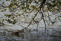 杭州湘湖树枝垂在水面上