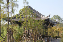 杭州湘湖亭子前的小树林