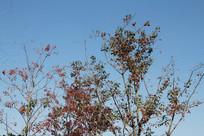 杭州湘湖稀疏的树枝